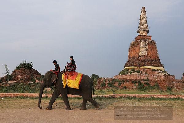 หมู่บ้านช้างอโยธยา อยุธยา Ayothaya Elephant Village