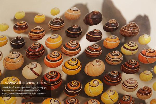 พิพิธภัณฑ์เปลือกหอย (Bangkok Seashell Museum) กรุงเทพฯ