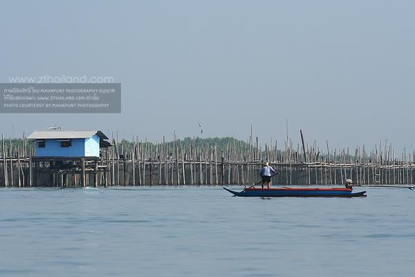 ล่องเรือชมปลาโลมา ท่าข้าม แม่น้ำบางปะกง ฉะเชิงเทรา