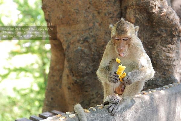เขาสามมุข บางแสน ชลบุรี