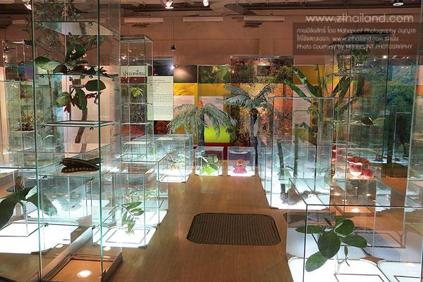 พิพิธภัณฑ์ธรรมชาติวิทยา ปทุมธานี