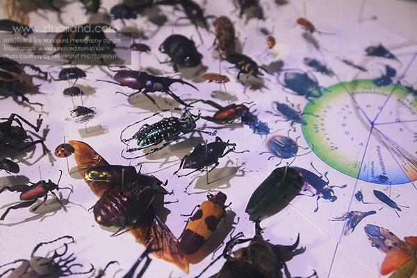 สวนสัตว์แมลงสยาม เชียงใหม่