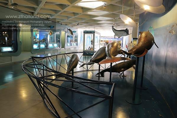 พิพิธภัณฑ์สัตว์น้ำบางแสน  สถาบันวิทยาศาสตร์ทางทะเล บางแสน ชลบุรี