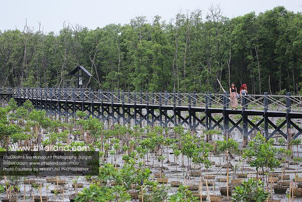 ศูนย์ศึกษาธรรมชาติและอนุรักษ์ป่าชายเลนเพื่อการท่องเที่ยวเชิงนิเวศ ชลบุรี