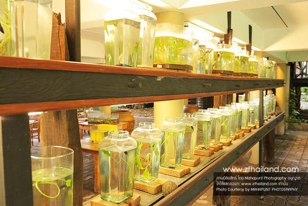 พิพิธภัณฑ์ปลากัดไทย สมุทรปราการ