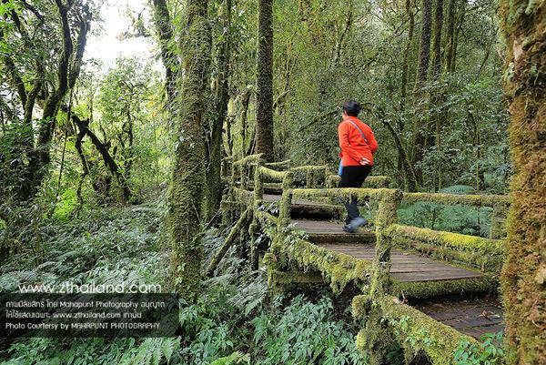 อ่างกา (เส้นทางเดินศึกษาธรรมชาติ) เชียงใหม่