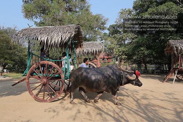 บ้านควาย (หมู่บ้านอนุรักษ์ควายไทย) สุพรรณบุรี