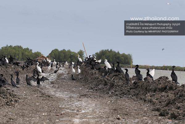 ศูนย์การเรียนรู้และปฏิบัติการ อนุรักษ์ฟื้นฟูทรัพยากรธรรมชาติและสิ่งแวดล้อมมหาชัยฝั่งตะวันออก สมุทรสาคร