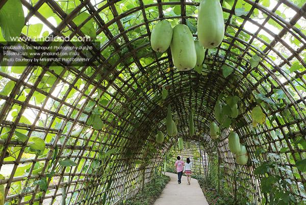 ฟลอร่าพาร์ค (Flora Park) วังน้ำเขียว นครราชสีมา