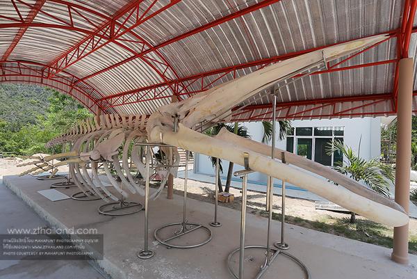 หาดคลองวาฬ ประจวบคีรีขันธ์