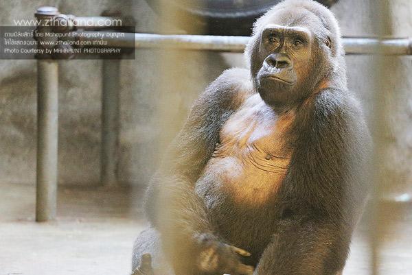สวนสัตว์พาต้า กรุงเทพฯ