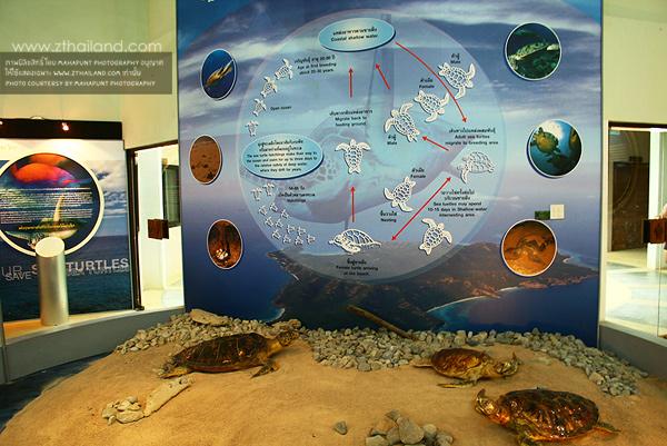 ศูนย์อนุรักษ์พันธุ์เต่าทะเล กองทัพเรือ สัตหีบ ชลบุรี
