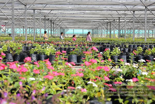 ศูนย์พันธุ์พืชเพาะเลี้ยง สุพรรณบุรี