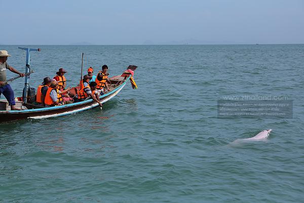 โลมาสีชมพู หาดขนอม นครศรีธรรมราช