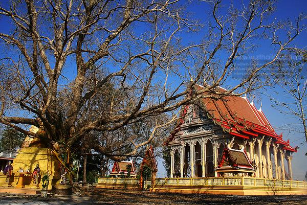 ต้นโพธิ์ศรีมหาโพธิ ปราจีนบุรี