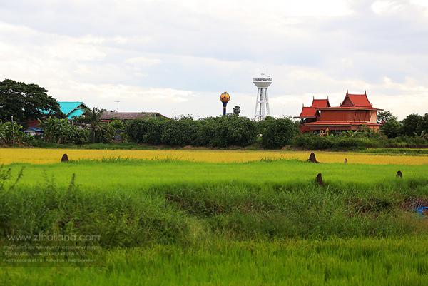 หมู่บ้านทรงไทย บ้านไผ่ดำพัฒนา อ่างทอง
