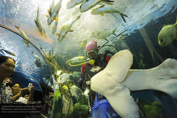 พิพิธภัณฑ์สัตว์น้ำหว้ากอ และอุทยานวิทยาศาสตร์พระจอมเกล้า ณ หว้ากอ ประจวบคีรีขันธ์